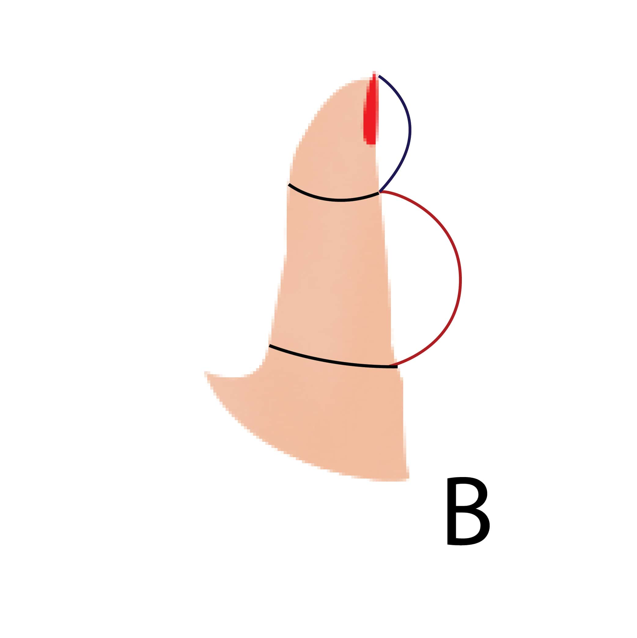 Вот как ваш характер зависит от формы вашего большого пальца